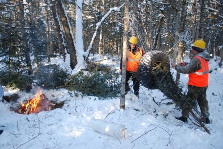 В Хабаровском крае лесники заготовят около четырех с половиной тысяч новогодних красавиц