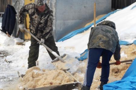 Полным ходом идет подготовка семян кедра корейского к весеннему  посеву