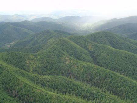 ФБУ «Рослесозащита» расширяет географию реализации федерального проекта «Сохранение лесов»