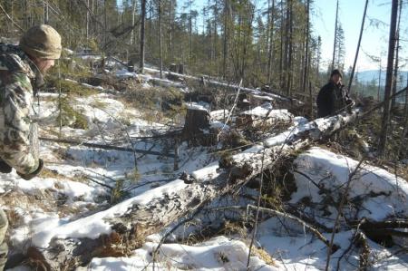 В Хабаровском крае лесничие выявили 40 нарушений лесного законодательства