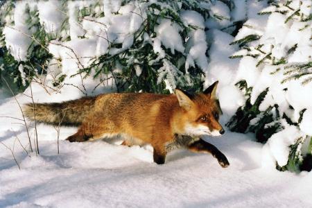 Считать зверей в лесу будут по новым правилам