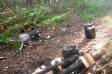 За нарушения правил санитарной безопасности в лесах в краевой бюджет поступит более двух миллионов рублей