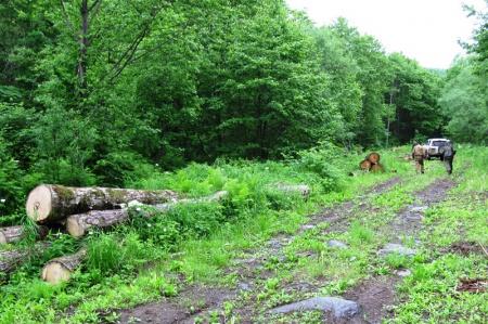 Лесные инспекторы провели около 1000 патрульных мероприятий и выявили более 80 фактов нарушений лесного законодательства