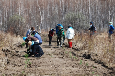В Хабаровском крае японские экологи поучаствовали в посадке трех тысяч саженцев кедра