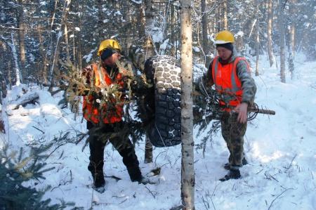 На территории Хабаровского края готовят новогодние ели