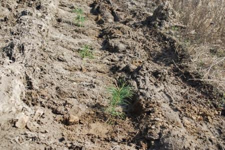 В Хабаровском крае основные работы по воспроизводству лесов выполнены в полном объеме
