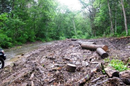 Государственными лесными инспекторами выявлено более 100 фактов незаконных рубок лесных насаждений
