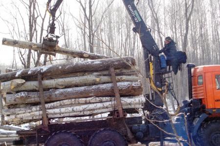 Аванские лесоводы раздадут хвойные лапки бесплатно