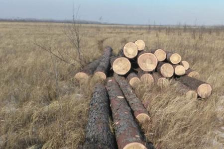 С начала года хабаровскими лесными инспекторами выявлено более 130 фактов незаконных рубок