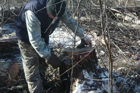 В Хабаровском крае лесная служба выявила факты незаконной рубки лесных насаждений