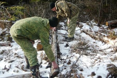 Специалисты Амгуньского лесничества установили факт незаконной рубки деревьев