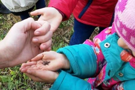 """Ребята из софийского школьного лесничества """"Муравейчик"""" завершают акцию """"Живи, лес!"""""""