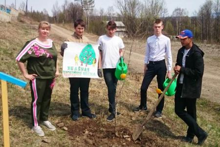 Пришкольный участок Тумнинской школы украсили 25 новых деревьев