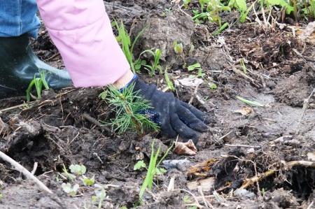 В Хабаровском крае начался весенний лесокультурный сезон