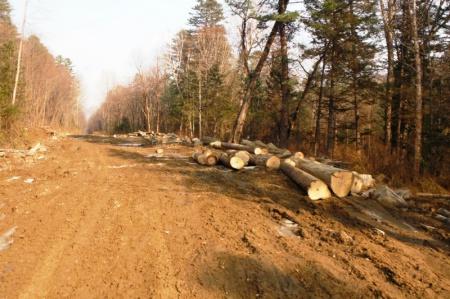 В Хабаровском крае управление лесами благодарит граждан за сотрудничество по охране лесов от лесонарушений