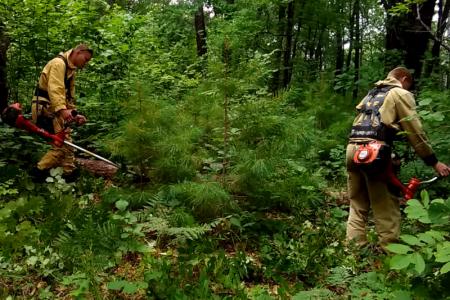 В Хабаровском крае продолжаются работы по воспроизводству лесов
