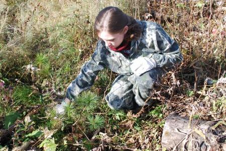 В учреждениях лесного хозяйства Хабаровского края  продолжаются агротехнические уходы  за лесными культурами
