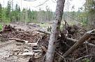 В Хабаровском крае лесные инспекторы проверили выполнение правил пожарной безопасности в лесах
