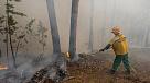 Авиалесоохрана: в Тюменской области остановлен огонь половины всех лесных пожаров